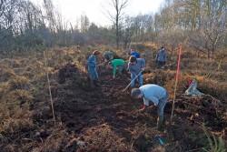 Retauration de landes par les Naturalistes en lutte  à Notre-Dame-des-Landes janvier 2015